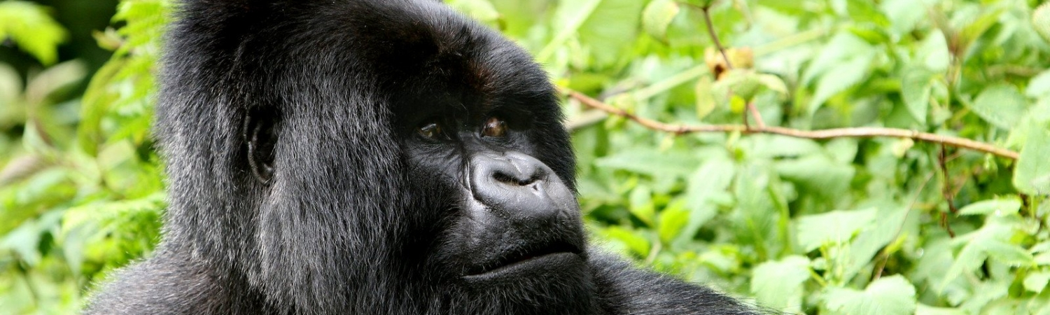 Virunga National Park, Congo