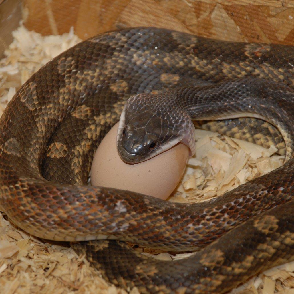 Reptile Village in Entebbe : Uganda Reptile Village